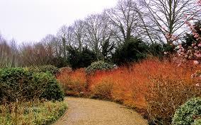 anglesey abbey winter gardens cambridgeshire uk a nati u2026 flickr