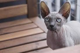 cat training collars and potential negative factors