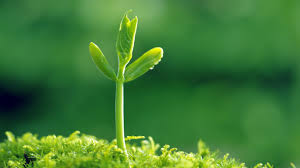 green plants shoots of green plants macro wallpaper desktop 7158 wallpaper
