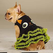 Pet Cat Halloween Costumes 47 Halloween Costumes For Your Dog Thefashionspot