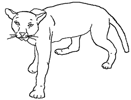 mountain lion coloring funycoloring