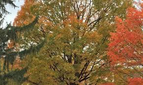 meet burlington s awesome trees of 2015 burlington parks
