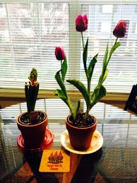 Miniature Indoor Plants by Miniature Balcony Gardening U2026in A 2 Foot By 10 Foot Space Alyssa