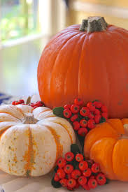 how to prepare a pumpkin how to cook bake or roast a pumpkin