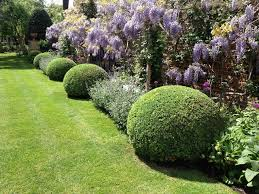 English Box Topiary - gworld 001 topiary care and maintenance of buxus sempervirens