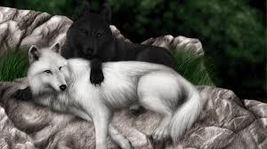 wolf wolves black white wallpaper 1920x1080 121972 wallpaperup