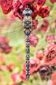 inspiration for one of my dragonfly designs