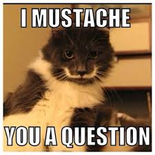 Hipster Cat Meme - catsparella hamilton the hipster cat mustache you a question