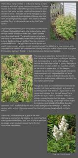 15 best garden shrub sobaria sem images on pinterest shrubs