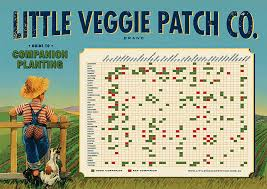 companion planting poster planting gardens and garden ideas