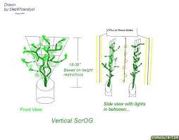 vertical scrog wall of green experiment trellis trainer