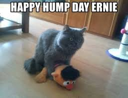 Happy Hump Day Memes - happy hump day ernie meme xyz