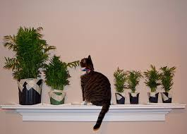 whiskerwednesday cat safe air purifying plants ray u0027s sew crafty