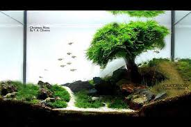 Asian Themed Fish Tank Decorations East Asia Forest Fishtank Collection On Ebay