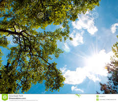 sky sun and tree stock photo image of blue beams background