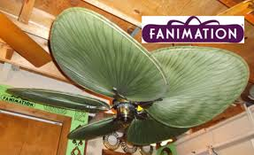 fanimation caruso ceiling fan fanimation islander ceiling fan youtube