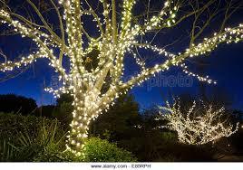 tree white lights outside stock photos tree