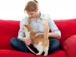 gatti divani come eliminare i peli e gatto dai vestiti dai divani