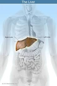 Liver Human Anatomy Liver Disease Symptoms Signs Diet And Treatment