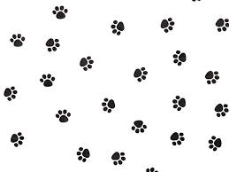 cheetah print tissue paper paw print tissue paper ream