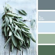 best 25 sage color palette ideas on pinterest neutral kitchen