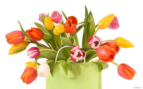 free flowers flowers pics images free