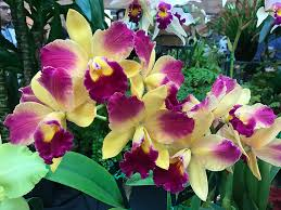 flower orchid pacific orchid garden exposition poge