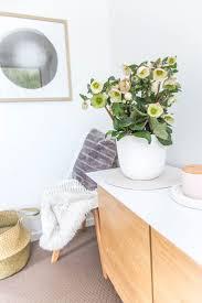 8 best indoor plants images on pinterest evergreen indoor