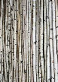 chuppah poles decorative birch poles 8ft 4 poles 1 1 2 2 1 2 dia