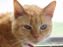 Barn Cat Names Browse Cute Boy Cat U0026 Kitten Names Petmd