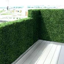 Apartment Backyard Ideas Backyard Privacy Plants Patio Privacy Plants Apartment Balcony