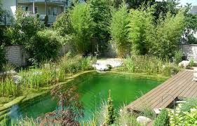 Small Backyard Ideas With Pool Chlorine Free Natural Swimming Pools Healthy And Eco Friendly