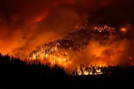 Wild Fire Columbia Gorge by Roughly 3 000 Scorched Trees Have Been Cleared From The Shoulders