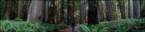 arborist forums ask an arborist forum tree forums tree forum