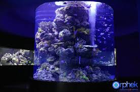 led lights for coral tanks aquarium led lighting photos best reef aquarium led lighting gallery