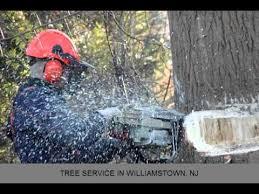 tree service williamstown nj cheap trees llc