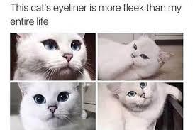 Funny Beauty Memes - the funniest beauty memes of 2016 bebeautiful