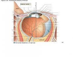 Anatomy Of The Eye Game Statistics The Sectional Anatomy Of The Eye 2