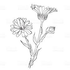 black and white sketch of blooming flowers stock vector art