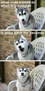 Pun Husky Meme - husky pun tumblr