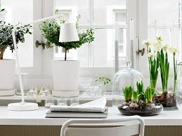 plants for office 7 splendid reasons to have indoor plants in your home and office