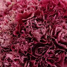 bulk carnations wine ganache carnations wedding wonders carnation