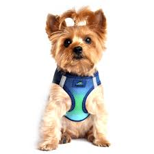 Four Paws Comfort Control Harness Dog Harnesses Baxterboo