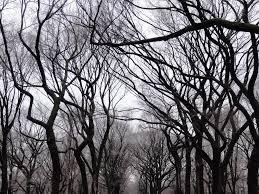 tim burton s trees in central park mapio
