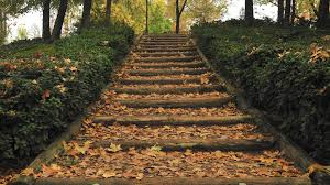 photography wooden stairs leaf tree autumn fall stair 1080p