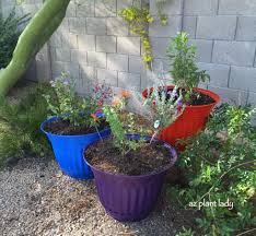 arizona native plants list creating a hummingbird container garden ramblings from a desert