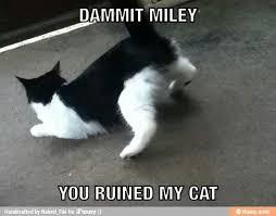 Twerk Meme - twerk cat meme by mistermm memedroid