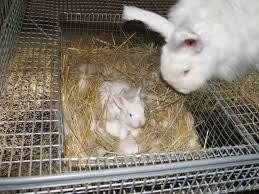 Cool Pets Rabbit Hutch 27 Best Rabbit Images On Pinterest Raising Rabbits Meat Rabbits