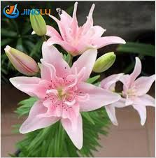 Cheap Flower Seeds - popular flower seeds cheap buy cheap flower seeds cheap lots from