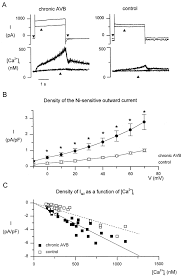 enhanced ca2 release and na ca exchange activity in hypertrophied